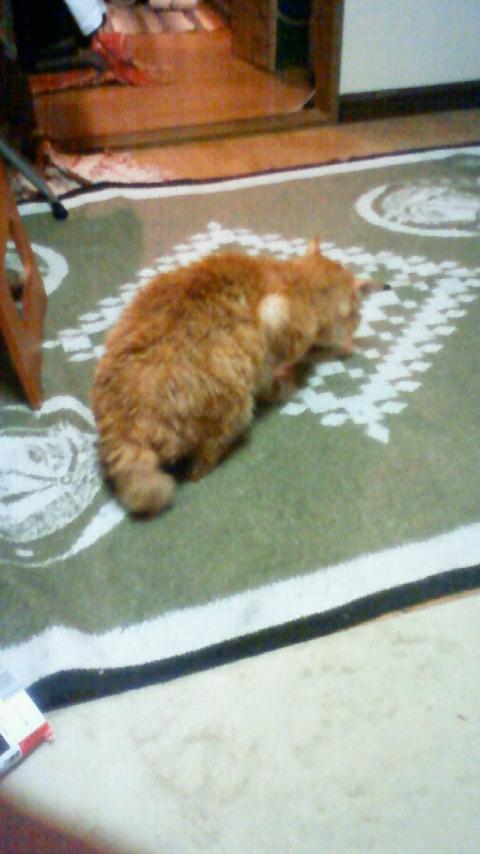 ネコが勝手にリラックス